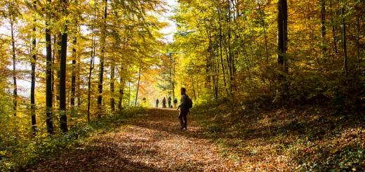 Herbstwanderung-2128